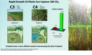 C3C4 plants